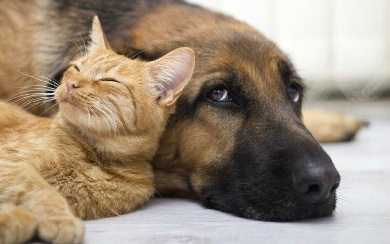 Удивительные животные! Кто умнее, кошка или собака?