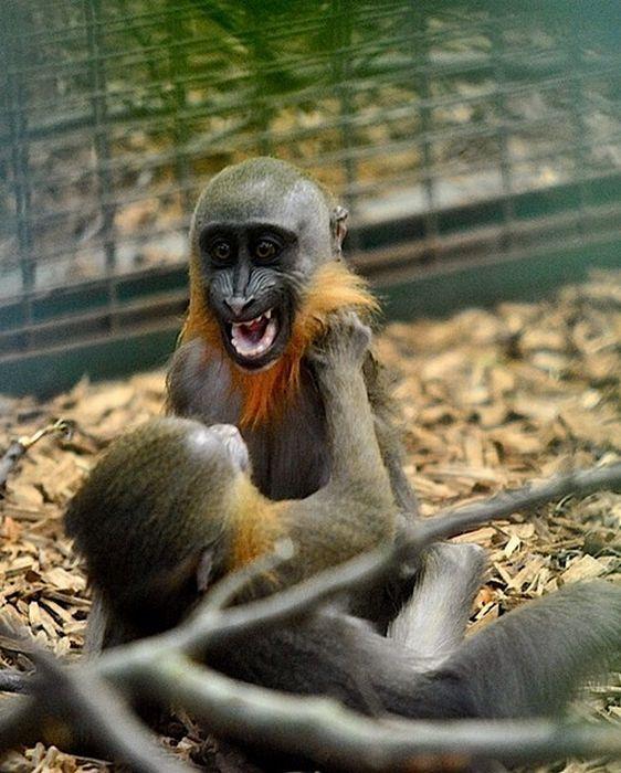 Смешные животные: коровы целуются с языком, а попугай убивает бананы