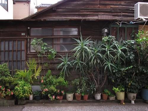 декор двора комнатными растениями