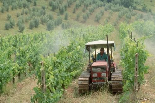 Чили достаточно равнинной местности, прозорливая MONTGRAS выбирает холмистую территорию под виноградники