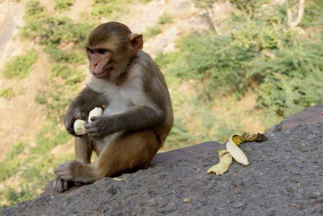 Велика Таємниця життя і Банан