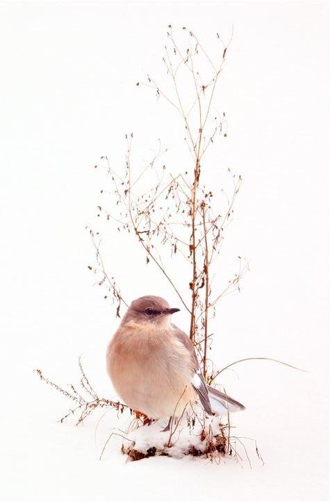 Зимние фото птиц. Обсуждение на LiveInternet - Российский ...
