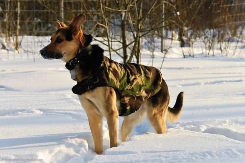 фотограф, фотография, фоторепортаж, собаки, домашние животные