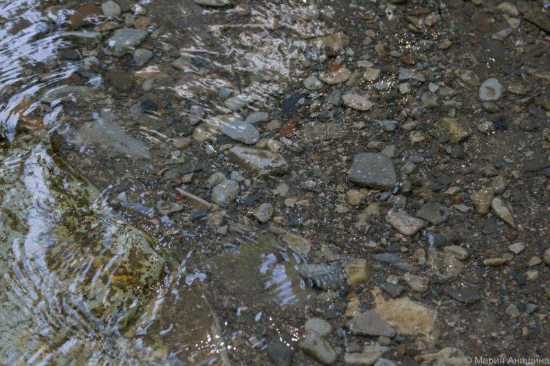 Вода и камни на дне, река Жане