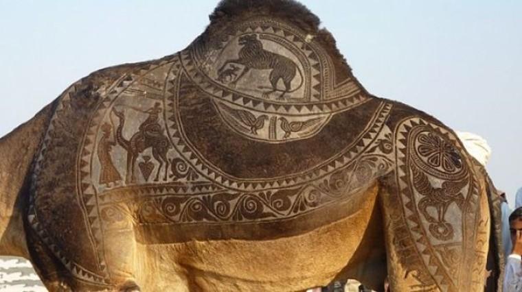 Camel art. Конкурсы красоты на верблюжьих фестивалях