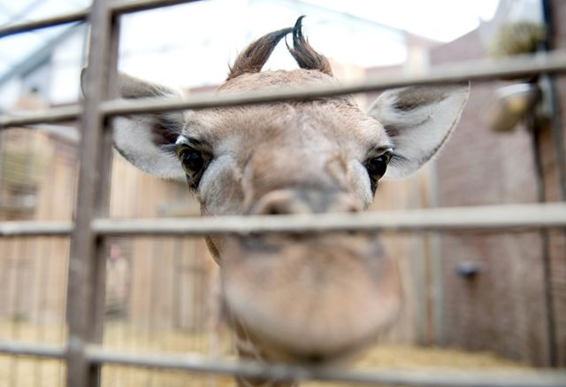 Зверюшки из зоопарков: самые интересные фотографии