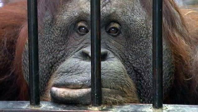 Животные приобщились к культуре в польском зоопарке