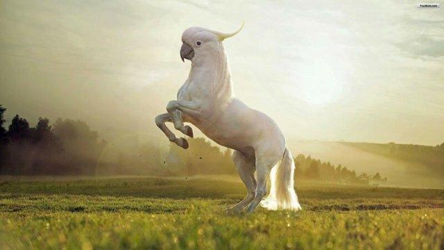 Фантастичні гібриди тварин і деревяний кінь