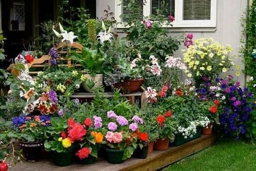 цветы в кадках на даче