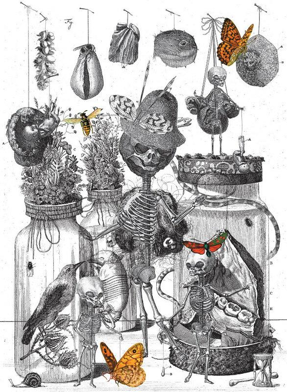Коллекция мертвецов доктора Рюйша lenarudenko LiveJournal