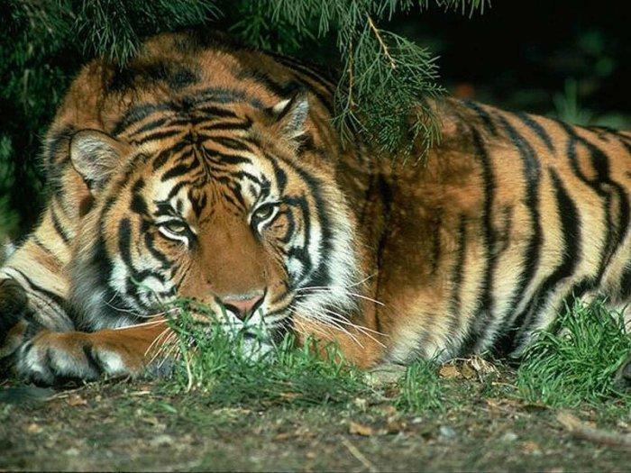 20 самых известных животных в истории России