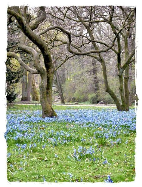 сад весной подснежники нарциссы анютины глазки фото