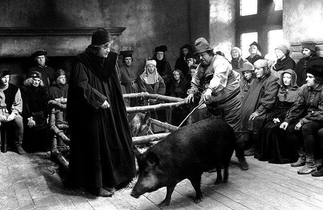 Час свиньи