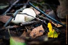 виды грибов, гриб фото, за грибами, лес россии, природа, сушка грибов, фотографии грибов, санкт-петербург