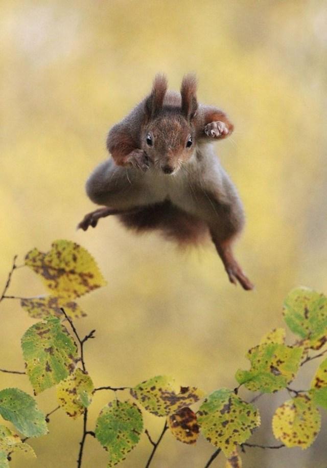 Смешные победители Конкурса фотографий дикой природы
