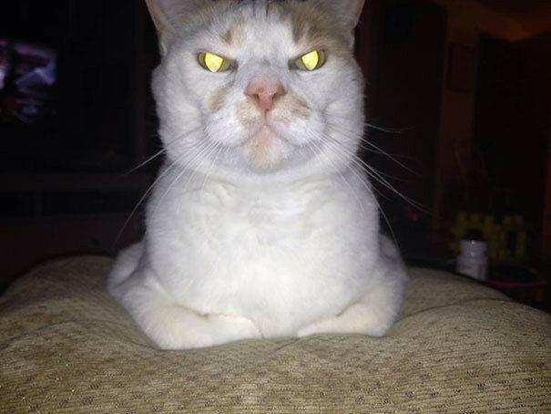 Просто кошмар… Ваш кот хочет вас убить!