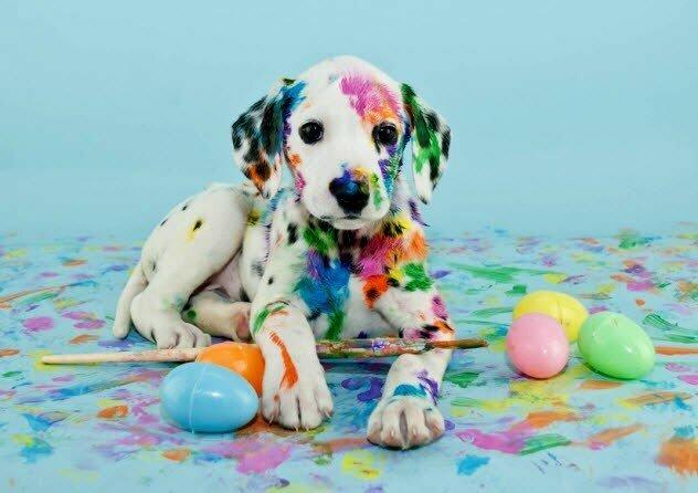 Собаки не различают цвета