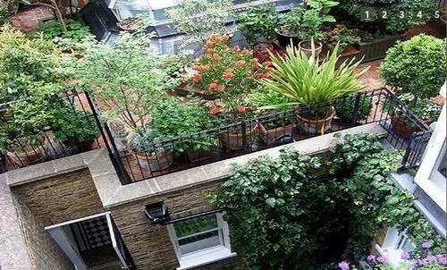 Сады на крышах - зелёные лёгкие мегаполисов