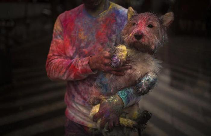 Новые смешные фотографии животных и людей