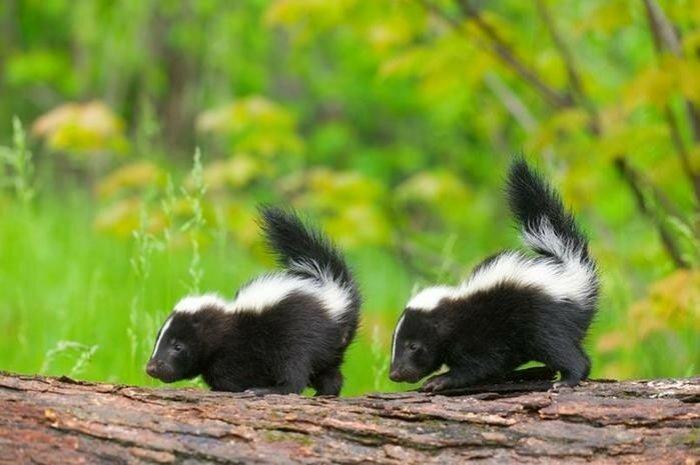 Необычные питомцы: 5 диких животных, которых можно приручить и держать дома