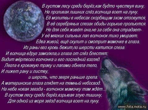 Стихи и песни про волков в картинках