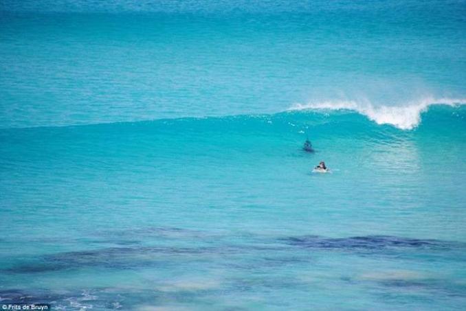 Фото: нападение белых акул на пляжи Западной Австралии