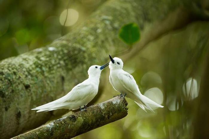 Самые интересные факты о птицах с фотографиями и видео