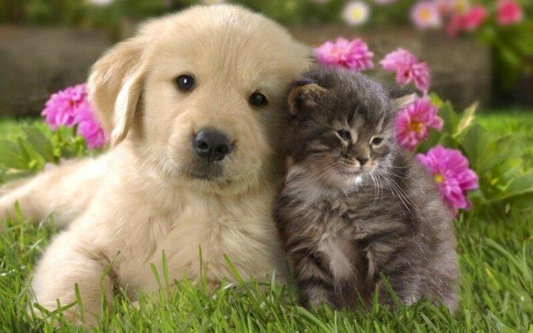 Удивительные животные! Кто умнее, кошка или собака