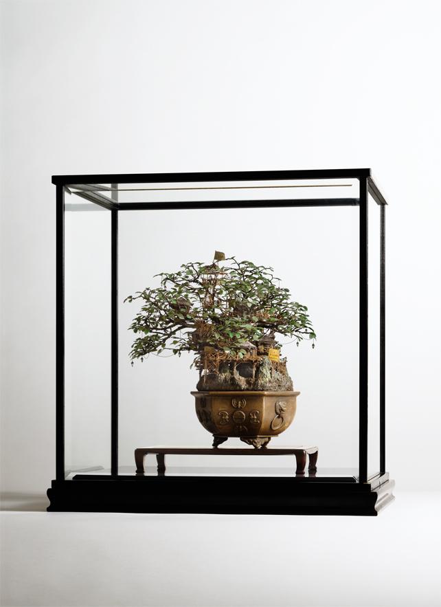 Архитектурные бонсаи художника Takanori Aiba