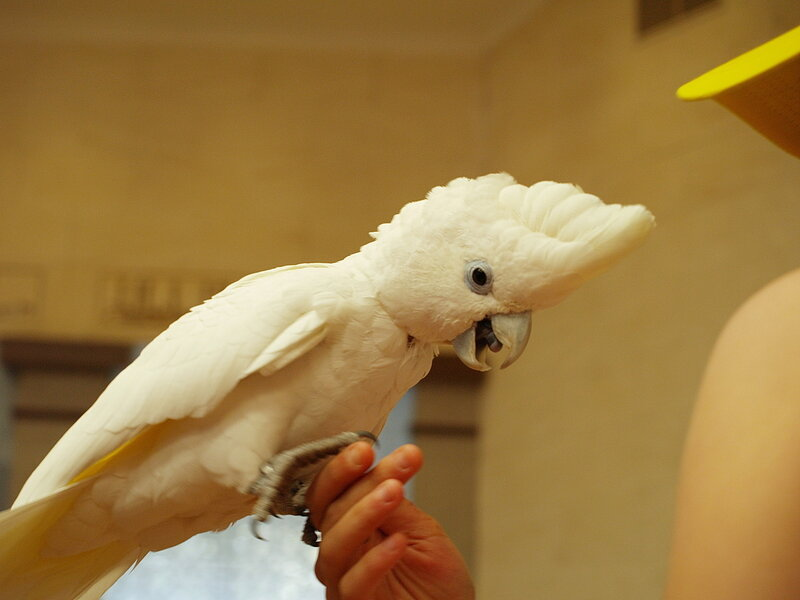 ízületi gyulladás papagájban hátfájás tüdőgyulladás covid