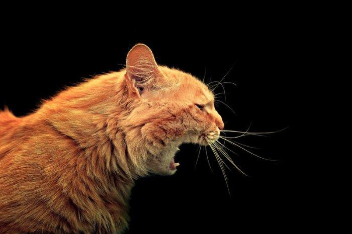 Код котов