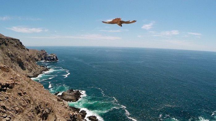 Почему нам нравятся фотографии с высоты полета птицы?