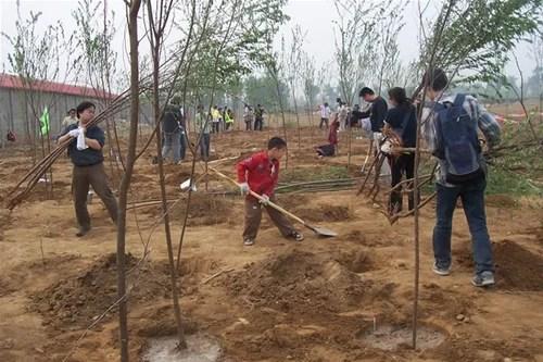 Как и когда правильно сажать деревья и кустарники в саду