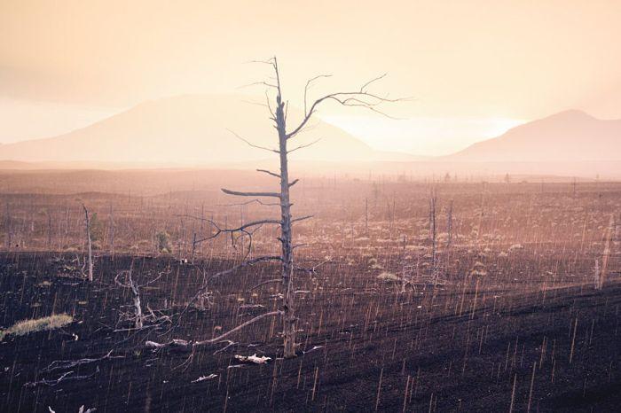 Струи дождя обрушились на сухие деревья мертвого леса.