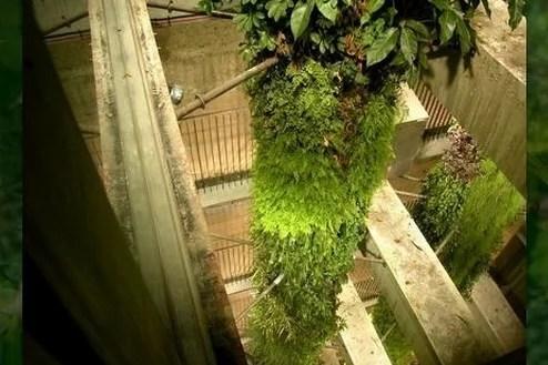 Вертикальные сады Патрика Бланка / Patrick Blanc