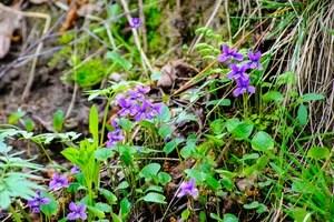 весна, город, красота, лес, май, парк, пейзаж, прогулка, растения, россия, санкт-петербург, флора, цветы, лахтинский разлив, природа