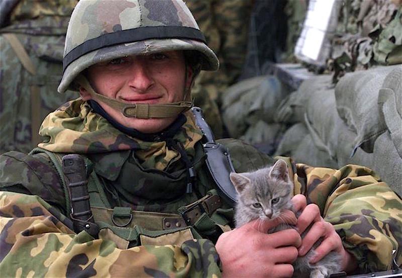 Боевые коты! Фотографии котов с солдатами на войне