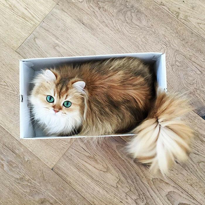 Котик Смузи, самый милый котик на фото и анимашках Instagram