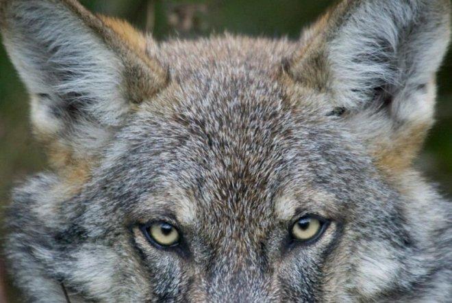 Посмотрите фото! Фраза «в мире животных» больше не будет прежней…