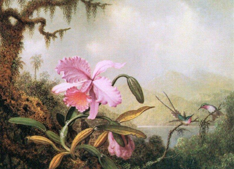 Martin Johnson Heade и его цветы и птицы к 8-му марта