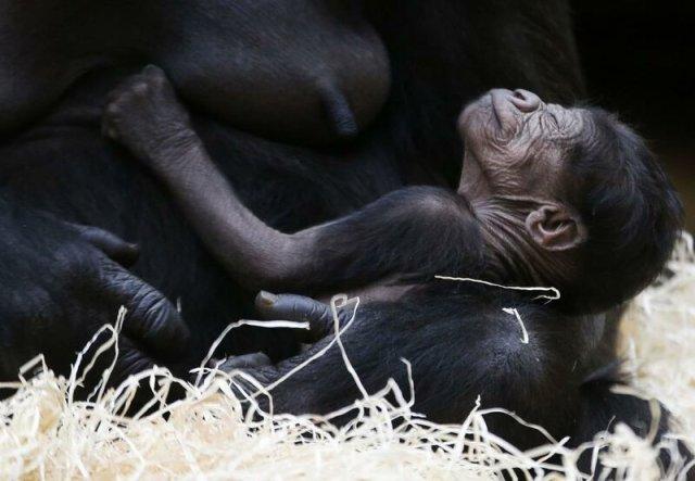 Жизнь в зоопарке в старых фотографиях