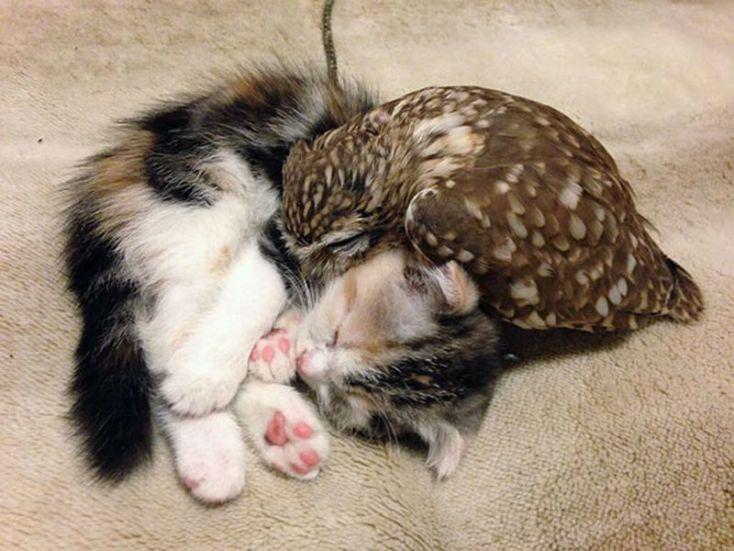 Котенок и совенок— удивительная дружба!