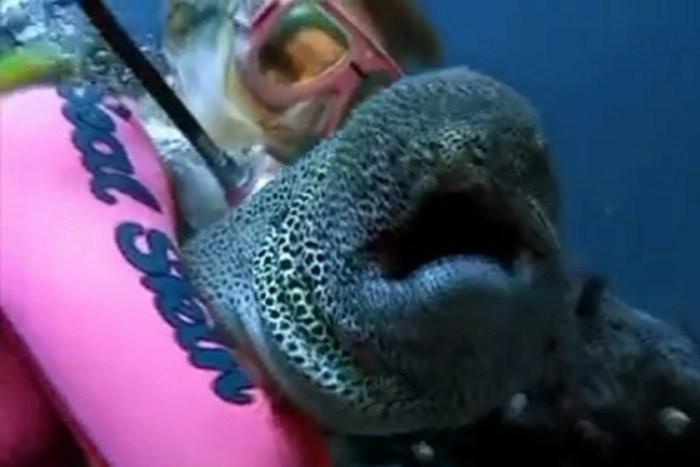 Редкие видеокадры: дружба дайвера и пятнистой мурены