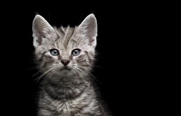 Зверские укладки: прически для животных в рекламе Braun