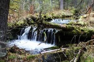 Лесной водопадик