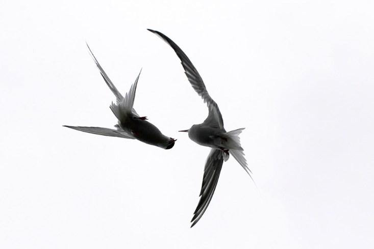 Воздушный бой. (Фото Alicia Hayden)