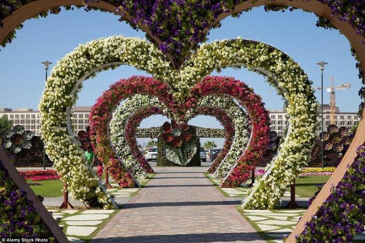 Парк «Сад чудес» в Дубае, ОАЭ. Dubai Miracle Garden – один из самых больших садов в мире. Площадь парка составляет 7,2 гектара, на которых произрастает около 100 миллионов цветов.