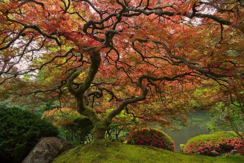 Современные животные, которые появились раньше деревьев