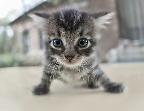 Очаровательная малышня - котята, кролики, щенята ...