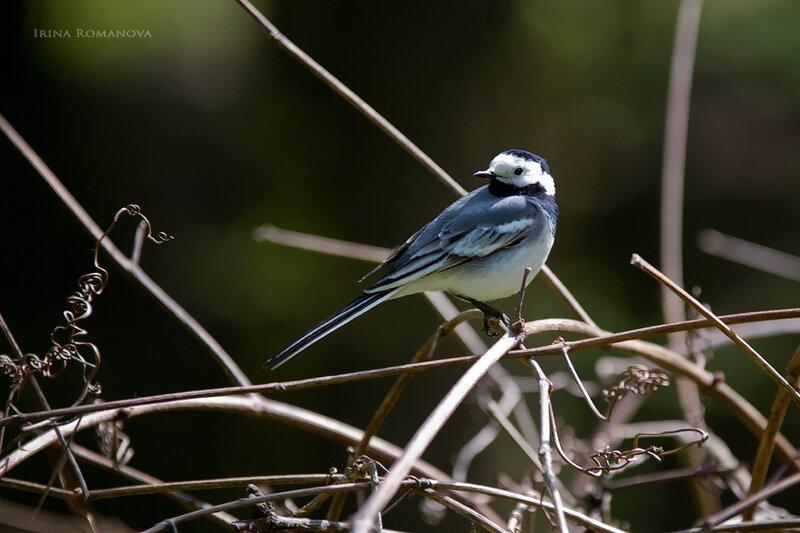 птицы ботансада 8 л.jpg